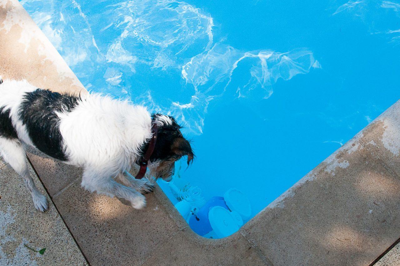 francois-goismier-un-intrus-dans-ma-piscine-1